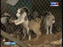 Стаи бродячих собак на улицах города Куда обращаться в случае угрозы