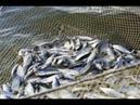 Приколы, неудачи, невероятные уловы и необычные случаи на рыбалке. № 20