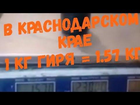 В Краснодарском крае 1 кг гиря весит больше, не покупайте на рынке пока не посмотрите это