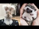 Cute baby animals Videos Cat catch Jerry Cutest Animals 77