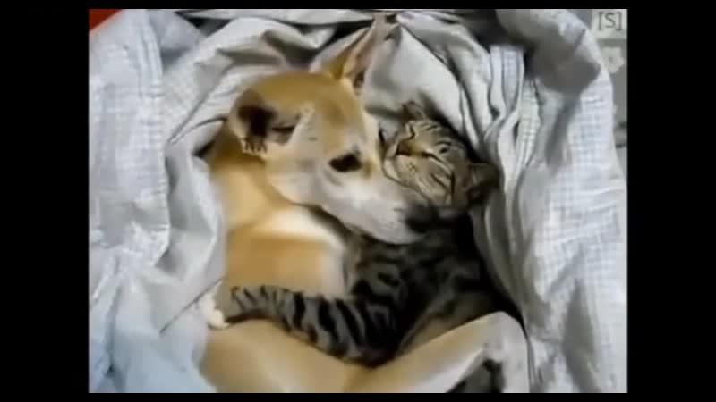 V кошки и собаки лучшие друзья