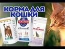 Какие корма советует ветеринар для кошки ВетОтвет