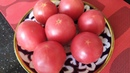 КАЛ ПАТИР Лепешки из помидорах Мамин фирменный рецепт Очень даже вкусно