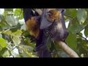 Мир Дикой природы - джунгли Азии (серия №6)