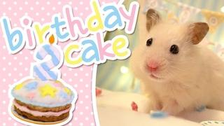 🎂 Birthday Cake   HAMSTER KITCHEN 🎂