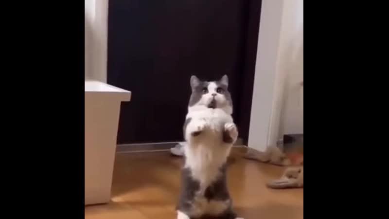Котик в растерянности хорошее настроение юмор смешное домашнее видео игры разума котенок киса киска у меня лапки дом .