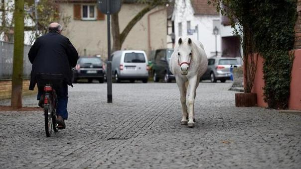 Лошадка Дженни, гуляющая сама по себе