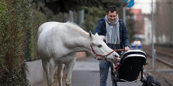 Лошадка Дженни, гуляющая сама по себе Каждое утро в немецком городе Франкфурте на прогулку выходит серая кобыла Дженни. Это может показаться невероятным, но кобыла ходит по улицам города