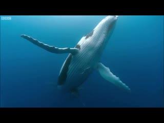 Nora En Pure - Diving With Whales (Daniel Portman Remix) ( https://vk.com/vidchelny)