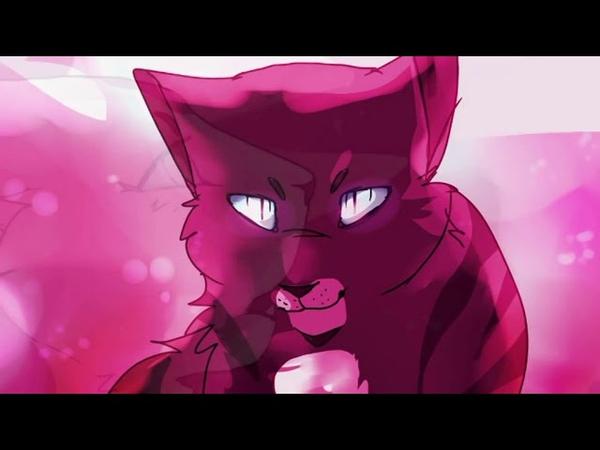 Коты воители Я тебе не верю