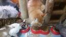 Видео про кошек. Жруны.