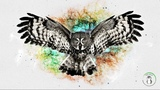 Wallpaper Engine The Owl