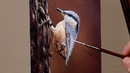 Oil Painting Demo - Nuthatch - 5x7 canvas panel