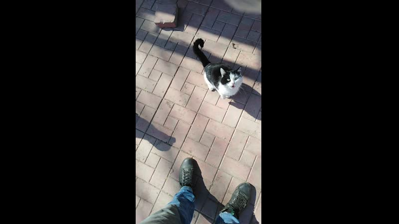 Кот торопит. Давай уже