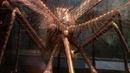 Huge Alien Flying Creature Discovered In Brazilian Jungle. Criptid? Mutant? Prehistoric? Alien?