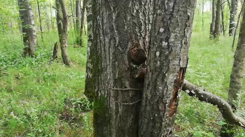Слился с деревом Птичка