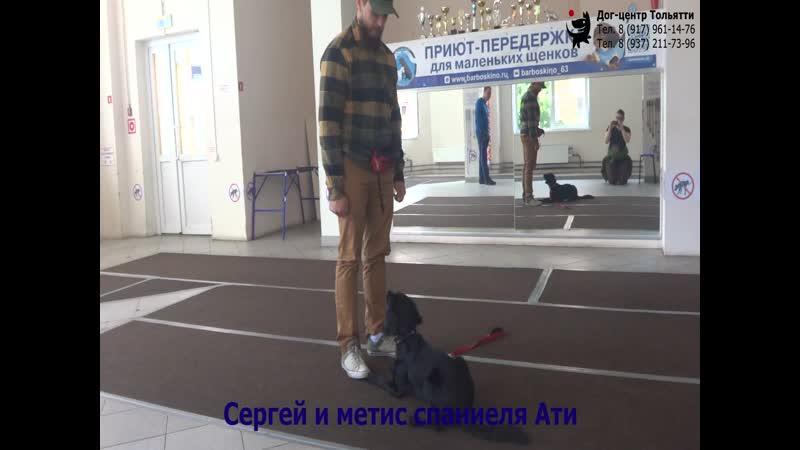 Занятие по дрессировке группа начального послушания обучение собак командам Стоять Сидеть Лежать Тольятти 15 июня 2019