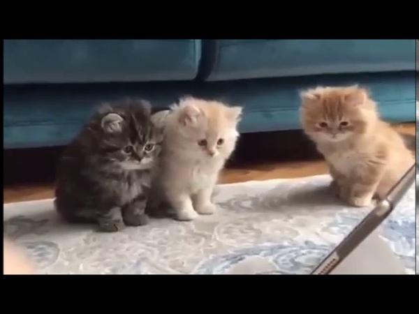 Маленькие котята смотрят мультик про Смурфиков