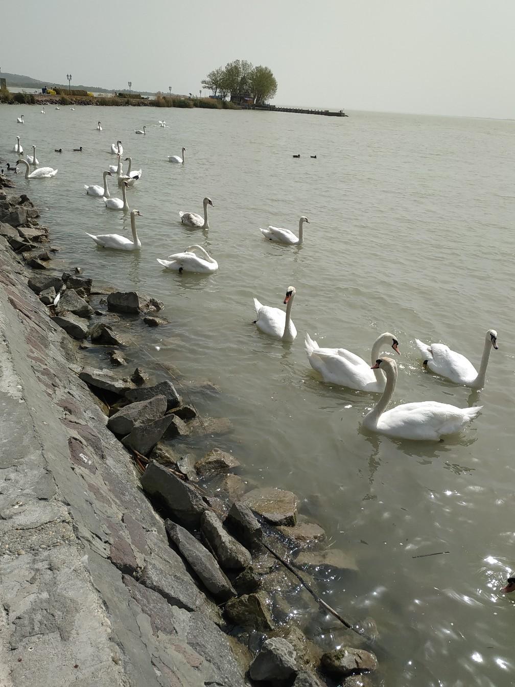 Уaputnik.ru: Самый русский город Венгрии и почему наши люди писают в озеро Хевиз