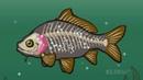 Wissensmix: Müssen Fische trinken?
