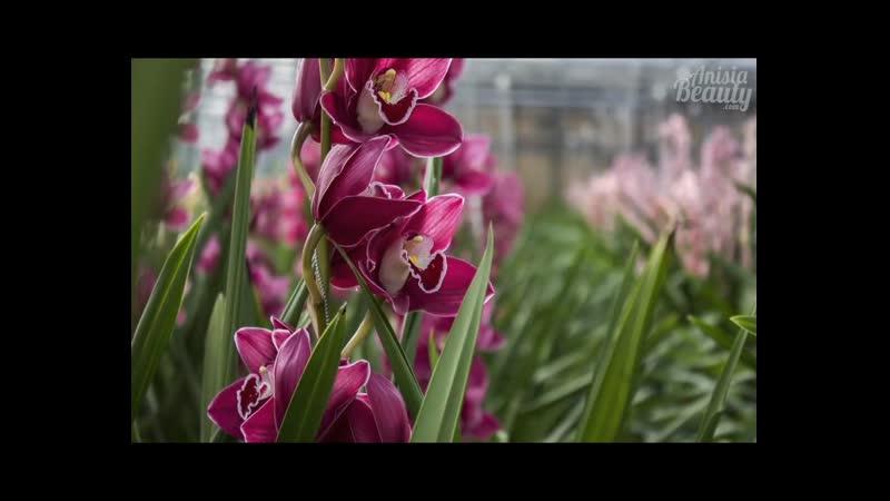 Оранжерея Орхидея