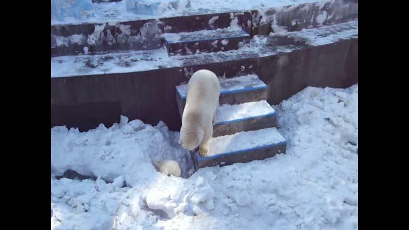 Герда общается с медвежатами 26 марта