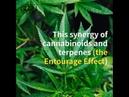 Medicinal cannabis strains to help with arthritis