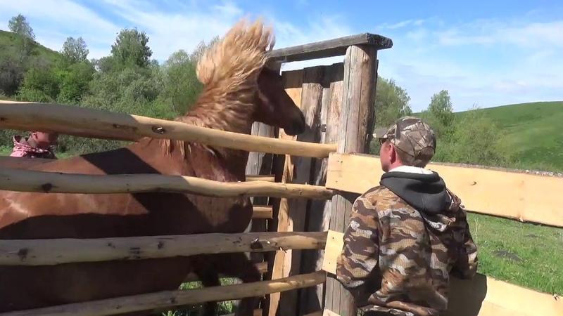 Косяк жеребца Рисунка, лечим лошадь.