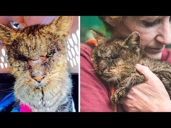 Женщина взяла на руки кота, к которому другие боялись даже подходить, и помогла ему