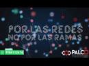 POR LAS REDES, NO POR LAS RAMAS - Notre-Dame, Arrancan campañas en Quintana Roo Elecciones 2019