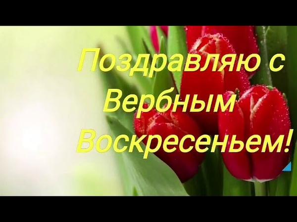 С Вербным Воскресеньем! Очень красивое видео-поздравление. Музыкальная видео-открытка.