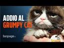 Morto il Grumpy Cat: addio al gatto protagonista dei meme diventato leggenda sul web