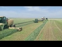 Wheat silage harvesting with ROC RT 1000 merger | Israel