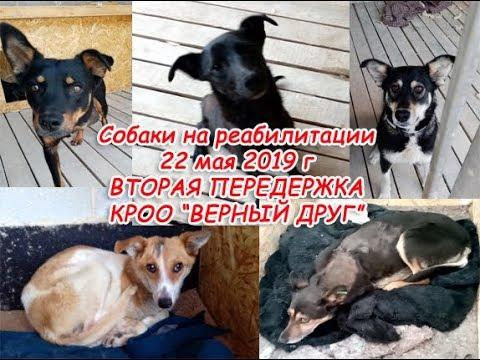 Собаки на реабилитации 22 мая 2019 год Хильда Леся Чара Бахчи и Вика