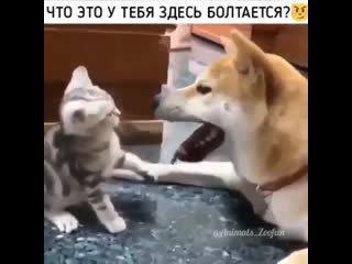 Собак клёвый. играет с ребенком))