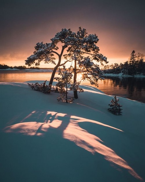 Фотограф делает идеальные снимки одиноких деревьев на фоне безмятежных финских пейзажей