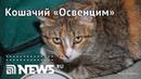 Живодёрка заперла умирать в квартире несколько десятков кошек