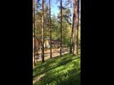 Live ГП Псковской обл. ЦДОО ДОЛ Алые Паруса