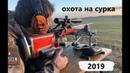 ОХОТА НА СУРКА ORENGUNTEAM 2019