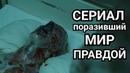 ЧЕРНОБЫЛЬ - АМЕРИКАНЦЫ ПОТРЯСЛИ УКРАИНУ и РОССИЮ ПРАВДОЙ в СЕРИАЛЕ Chernobyl HBO