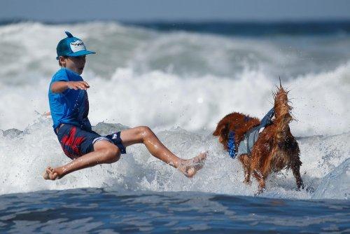 Соревнования по сёрфингу среди собак Top Surf Dog 2019 в Калифорнии В городе Дель-Мар, штат Калифорния, США, 8 сентября прошло ежегодное соревнование по сёрфингу среди собак Top Surf Dog 2019,