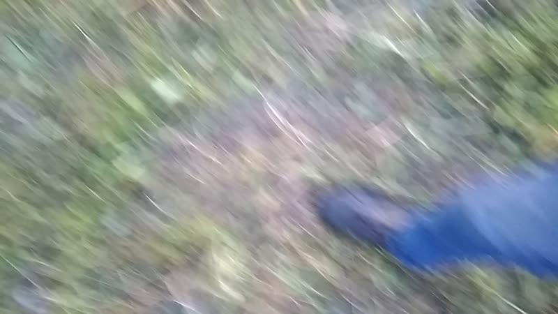 Стафф Бой играет с колесом