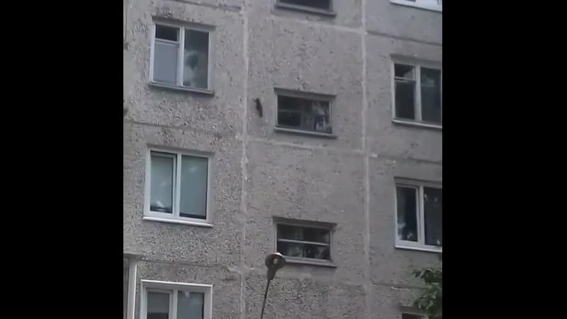 Белка паук