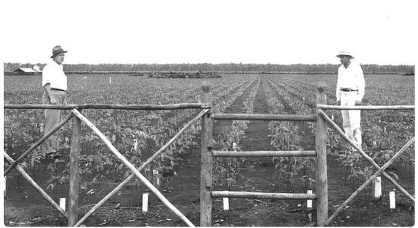 ФОРДЛАНДИЯ САМАЯ БОЛЬШАЯ ОШИБКА ГЕНРИ ФОРДА Как Генри Форд решил создать собственную мегаплантацию каучуконосных деревьев и что из этого вышло.НАЧАЛОВ начале 20 века всё мировое производство