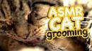 ASMR Cat Grooming 38