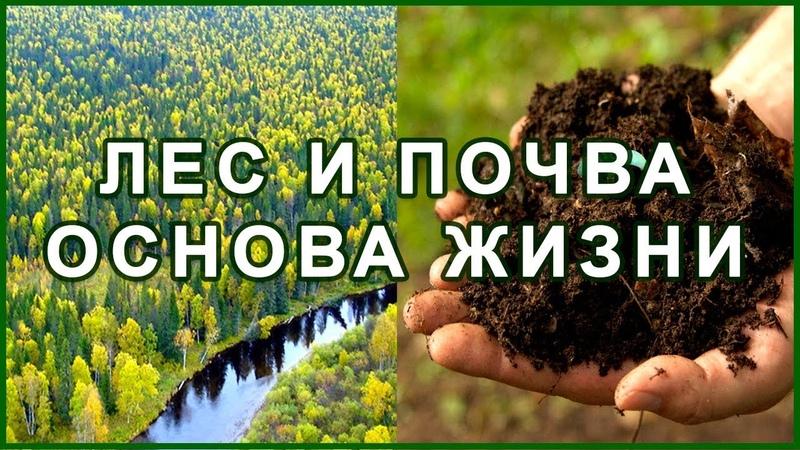 Лес и Почва Экология Заповедник Голод Засуха 1891 1921 1946 г Жизнь
