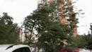 НаМоскву обрушился самый мощный иразрушительный запоследние сто лет ураган