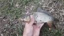 РЫБАЛКА НА ФИДЕР ловля карася на донки Рыбалка на пруду