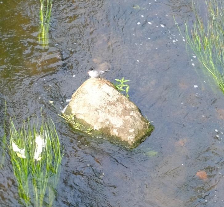 Птица на камне