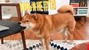 Я РЖАЛ ПОЛЧАСА. Смешные Коты и Собаки. ПРИКОЛЫ С ЖИВОТНЫМИ 6.0